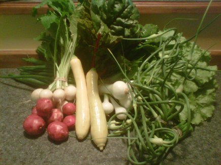 Our week 2 CSA: summer squash, new potatoes, radishes, cilantro, garlic scapes, chives, Swiss chard, and lettuce.